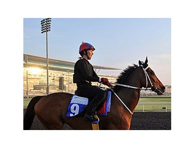 "<br><a target=""blank"" href=""http://photos.bloodhorse.com/AtTheRaces-1/Dubai-2014/38085033_tQgx4h#!i=3147403780&k=kK4MPpS"">Order This Photo</a>"