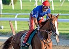 "California Chrome <br><a target=""blank"" href=""http://photos.bloodhorse.com/TripleCrown/2014-Triple-Crown/Belmont-Stakes-146/i-BTnqQCt"">Order This Photo</a>"