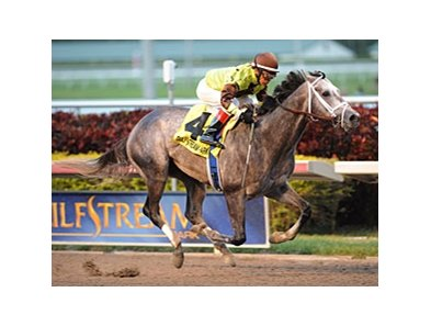 "Graydar won the 2013 Donn Handicap.<br><a target=""blank"" href=""http://photos.bloodhorse.com/AtTheRaces-1/at-the-races-2013/27257665_QgCqdh#!i=2357931921&k=hv2CRdr"">Order This Photo</a>"