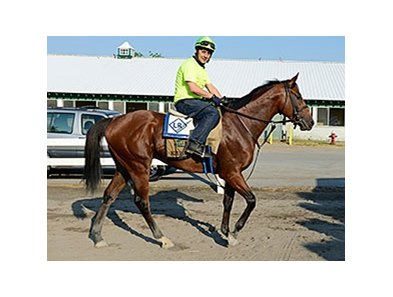 "Kid Cruz at Belmont Park on June 3. <br><a target=""blank"" href=""http://photos.bloodhorse.com/TripleCrown/2014-Triple-Crown/Belmont-Stakes-146/i-Jd3nrqC"">Order This Photo</a>"