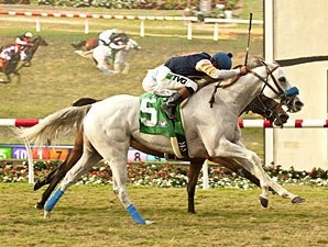 Grade I Winner Egg Drop Bred to Tapit