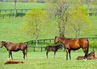 FL Breeder, Stallion Owner Bonuses Approved
