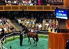 FT Saratoga $1.25M Sale-topper