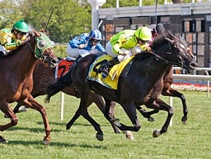 The 2013 American St. Leger was won by Dandino.