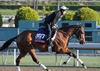 "Little Mike <br><a target=""blank"" href=""http://photos.bloodhorse.com/BreedersCup/2013-Breeders-Cup/Breeders-Cup/32986083_QMHXWK#!i=2869489442&k=mZkmT4f"">Order This Photo</a>"