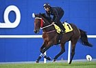 Dubai World Cup: George Simon