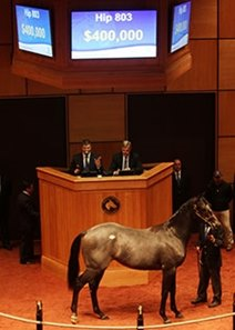 Hip 803, a colt by Street Cry, brought $400,000.