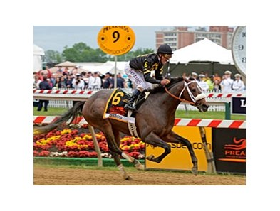 "Oxbow drew post 5 for the William Hill Haskell Invitational.<br><a target=""blank"" href=""http://photos.bloodhorse.com/TripleCrown/2013-Triple-Crown/Preakness-Stakes-138/29423277_98XmS6#!i=2519582770&k=t2VnCcN"">Order This Photo</a>"