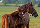 2015 Live Foal Crop Up Nearly 2%