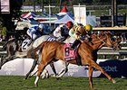 "Wise Dan<br><a target=""blank"" href=""http://photos.bloodhorse.com/BreedersCup/2013-Breeders-Cup/Mile/33150010_L6N4PX#!i=2888974700&k=JPkB87S"">Order This Photo</a>"