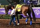 Breeders' Cup 2014: Moreno Checks Out Santa Anita