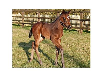 A filly out of Precious Secret, by Fusaichi Pegasus, is the first foal for European sprinter Bated Breath.