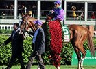 "California Chrome<br><a target=""blank"" href=""http://photos.bloodhorse.com/TripleCrown/2014-Triple-Crown/Kentucky-Derby-140/i-C3btprT"">Order This Photo</a>"