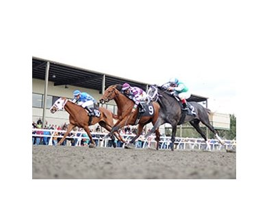 "Here's Johnny (center) takes the colt and gelding division of the OBS Champions Stakes.<br><a target=""blank"" href=""http://photos.bloodhorse.com/AtTheRaces-1/At-the-Races-2014/35724761_2vdnSX#!i=3035255023&k=WRmNcFd"">Order This Photo</a>"