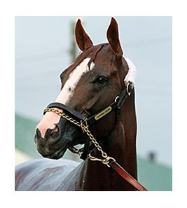 "California Chrome will start from post 5 in the Kentucky Derby.<br><a target=""blank"" href=""http://photos.bloodhorse.com/TripleCrown/2014-Triple-Crown/Kentucky-Derby-Workouts/i-TZxx672"">Order This Photo</a>"