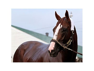 "California Chrome<br><a target=""blank"" href=""http://photos.bloodhorse.com/TripleCrown/2014-Triple-Crown/Kentucky-Derby-Workouts/i-BvpM5q2"">Order This Photo</a>"