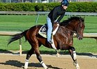 "Medal Count<br><a target=""blank"" href=""http://photos.bloodhorse.com/TripleCrown/2014-Triple-Crown/Kentucky-Derby-Workouts/i-Fvcngkw"">Order This Photo</a>"