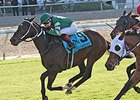 Daddy Nose Best won the Col. E. R. Bradley Handicap on Jan. 18.