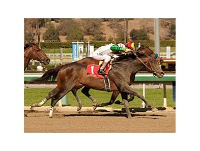 Wild Dude wins the Palos Verdes.