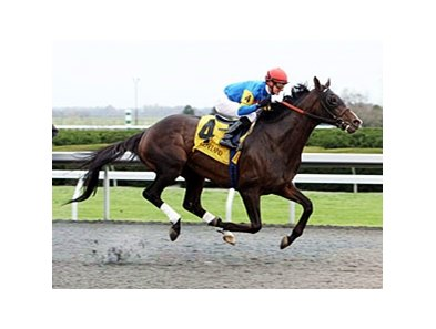 Newsdad won the Fayette Stakes at Keeneland in 2012.