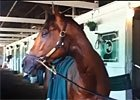 Up Close And Personal With Goldencents