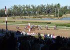 Hialeah Park currently offers only Quarter Horse racing