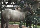 Keeneland Sept Yearling Sale: Hip 749 in the Ring