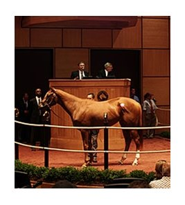 Bedford Land was the Fasig-Tipton Kentucky July Sale topper.