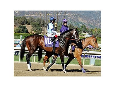 Verrazano