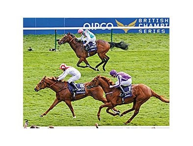 "Australia (purple silks) finished third in the 2014 QIPCO Two Thousand Guineas. <br><a target=""blank"" href=""http://photos.bloodhorse.com/AtTheRaces-1/At-the-Races-2014/i-QdSNbG2"">Order This Photo</a>"
