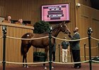 This Medaglia d'Oro filly, who brought $1.5 million, is out of Dowry, the only mare Emler and Celeste Neuman own.