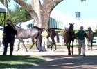 Keeneland Sept Yearling Sale Preview