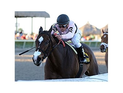 "Devil's Cave won the 2014 Sabin Stakes. <br><a target=""blank""http://photos.bloodhorse.com/AtTheRaces-1/At-the-Races-2014/35724761_2vdnSX#!i=3078717863&k=63fQXpP"">Order This Photo</a>"