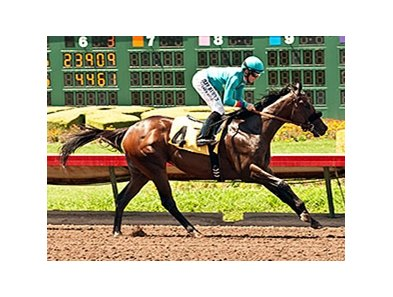 Story to Tell wins the W.L. Proctor Memorial Stakes.