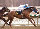 Russell Road is six-for-six in West Virginia-bred stakes.