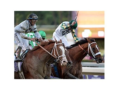 "Mucho Macho Man (right) defeated Will Take Charge by a nose in the 2013 Breeders' Cup Classic.<br><a target=""blank"" href=""http://photos.bloodhorse.com/BreedersCup/2013-Breeders-Cup/Classic/33150031_7ZnLk4#!i=2886417538&k=4zKvpNR"">Order This Photo</a>"