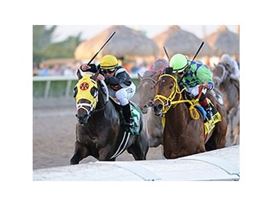 Wildcat Red in the Fountain of Youth.