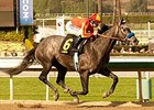 Midnight Hawk won the Sham Stakes on January 11.