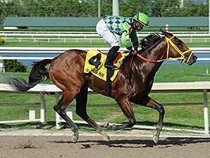 Wildcat Red Posts Bullet Breeze for Haskell