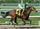 Wildcat Red