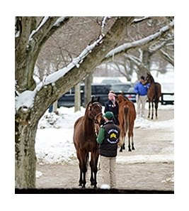Fasig-Tipton Kentucky January Sale.