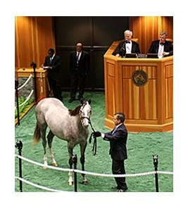 Hip 69, by Tapit, sold for $1 million.