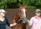 "Wise Dan at Saratoga on August 28.<br><a target=""blank"" href=""http://photos.bloodhorse.com/AtTheRaces-1/At-the-Races-2014/i-rQZxDvw"">Order This Photo</a>"