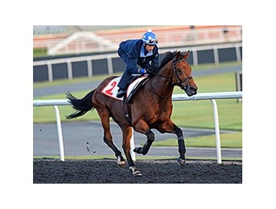 "Hong Kong based Akeed Mofeed may run in the Arlington Million.<br><a target=""blank"" href=""http://photos.bloodhorse.com/AtTheRaces-1/Dubai-2014/38085033_tQgx4h#!i=3145438390&k=w8gHnSF"">Order This Photo</a>"