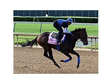 "Ria Antonia <br><a target=""blank"" href=""http://photos.bloodhorse.com/TripleCrown/2014-Triple-Crown/Kentucky-Derby-Workouts/i-DWbhnhr"">Order This Photo</a>"