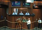 Indicators Drop at Ocala August Yearling Sale