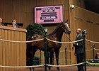 Hip 680, a War Front colt, brought $2.2 million at the 2014 Keeneland September yearling sale.