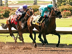 Story to Tell won the 2014 Willard L. Proctor Memorial Stakes.