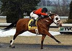 Harry's Holiday won the 96ROCK Stakes by 8 lengths on February 1.