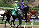 Ria Antonia